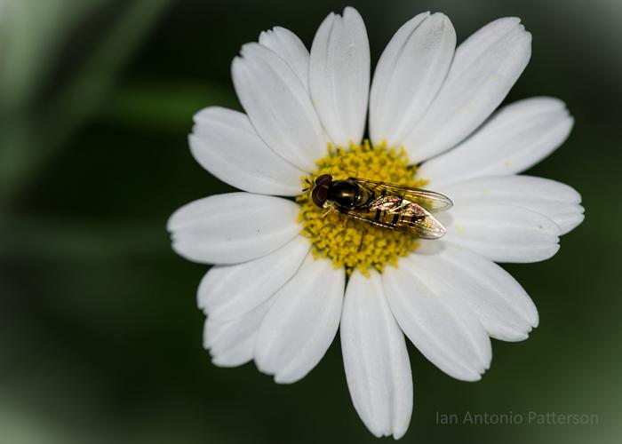 ian-antonio-patterson.com, ian-antonio-patterson, reflective, pentax-k5, macro-photography, 100mm-Macro, flower-fetish, Kent-UK, Jamaica
