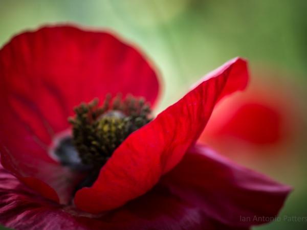 ian-antonio-patterson.com, ian-antonio-patterson, reflective, pentax-k5, macro-photography, 100mm-Macro, flower-fetish, Berlin-Germany, Jamaica