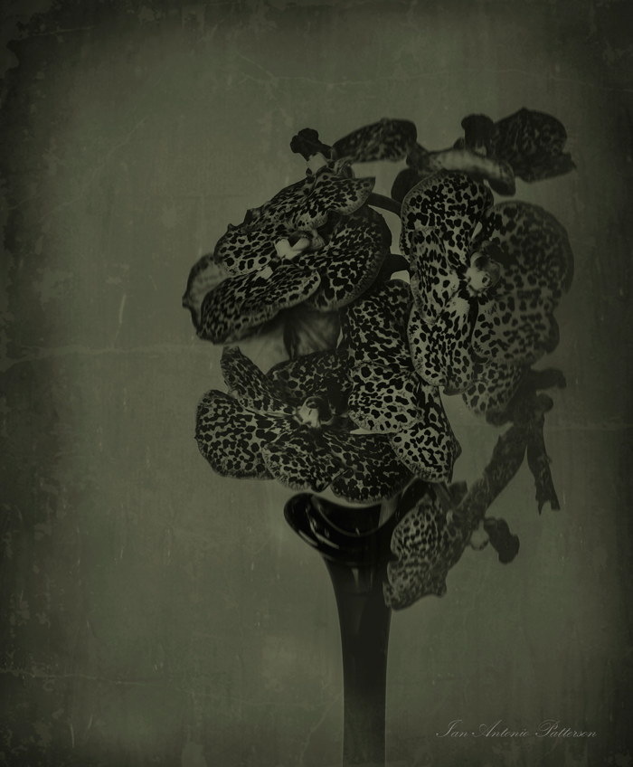 ian-antonio-patterson.com, ian-antonio-patterson, reflective, creative-edit, pentax-k5, macro-photography, SMC Pentax-A 645 120mm F4 Macro, rendition-wet-plate-collodion, flower-fetish, Berlin-Germany, Jamaica
