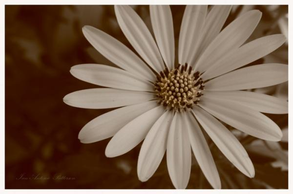 ian-antonio-patterson.com, ian-antonio-patterson, reflective, creative-edit, pentax-k5, macro-photography,100mm-Macro, flower-fetish, Potsdam-Germany, Jamaica