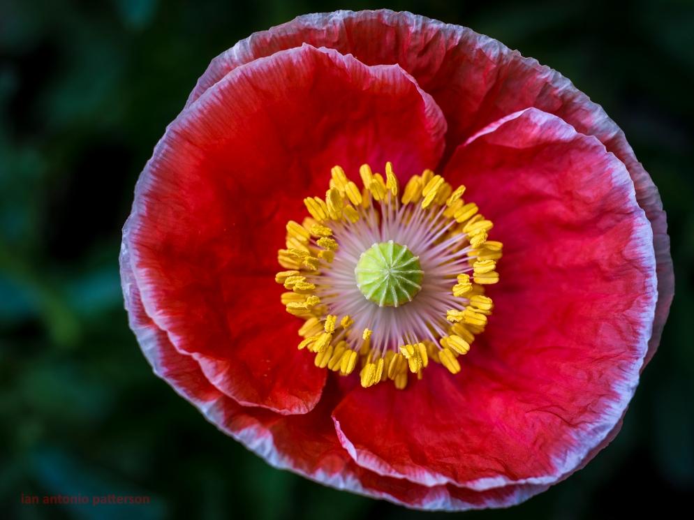 ian-antonio-patterson, flower-fetish,