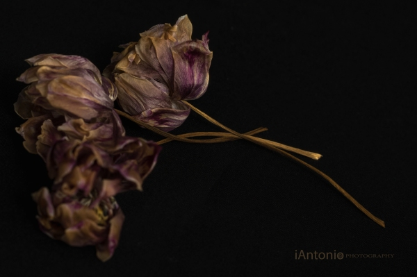 iAntonio, iAntonio-photography, iAntonio photography, ARTICULATE